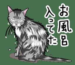 Cat American Short hair sticker #286458