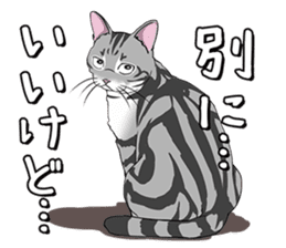 Cat American Short hair sticker #286461
