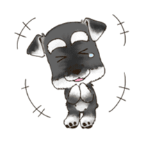 "Miniature Schnauzer ""MOMO"" sticker #294435"