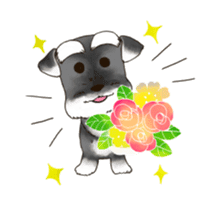 "Miniature Schnauzer ""MOMO"" sticker #294452"