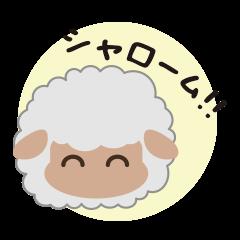 Shalom Sheep