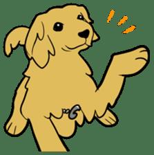 Chobi the GoldenRetriever sticker #303107