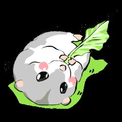 Lovely hamster SHISHAMO