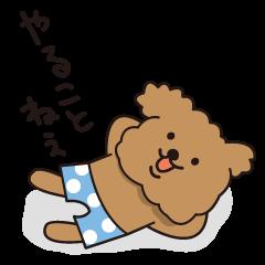 Selfish poodle