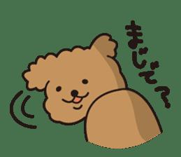 Selfish poodle sticker #313965