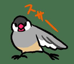 Java sparrow-chan sticker #315230