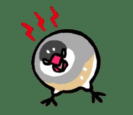 Java sparrow-chan sticker #315238