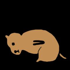 PDOG~Prairie dog~