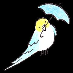 Cute Little Parakeet - HAPPY LIFE
