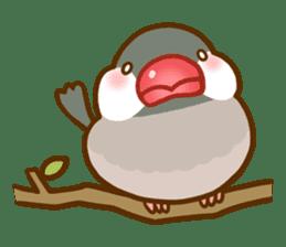 Chubby java sparrow sticker #335185