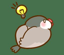Chubby java sparrow sticker #335195