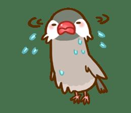 Chubby java sparrow sticker #335199