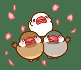Chubby java sparrow sticker #335203