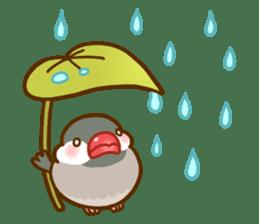 Chubby java sparrow sticker #335207