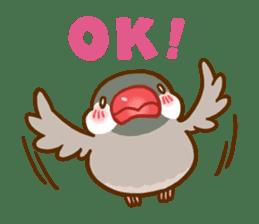 Chubby java sparrow sticker #335214