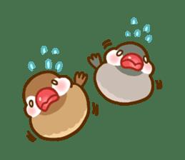 Chubby java sparrow sticker #335216