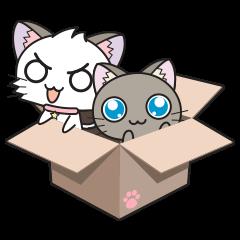 Hoshi & Luna Diary