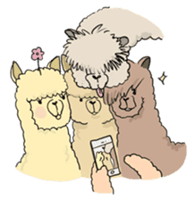 Team Alpaca sticker #346944