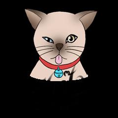 Happy Por-Poh Cat