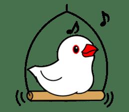 Love Bird Java sparrow sticker #357566