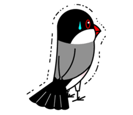 Love Bird Java sparrow sticker #357583