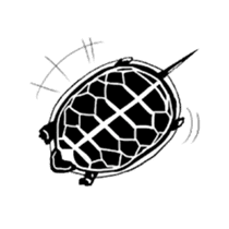 Tortoise life sticker #360066