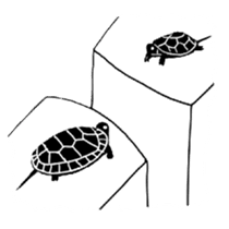 Tortoise life sticker #360101