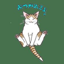 Tabby CATS sticker #364476