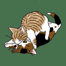 Tabby CATS sticker #364480
