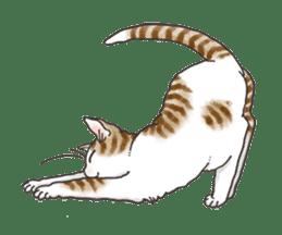 Tabby CATS sticker #364485