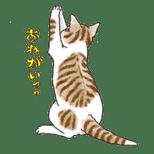 Tabby CATS sticker #364488