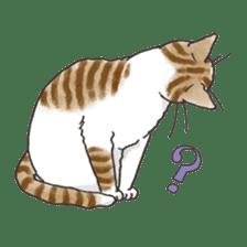 Tabby CATS sticker #364490