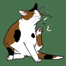 Tabby CATS sticker #364491