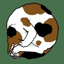 Tabby CATS sticker #364492