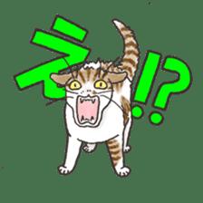 Tabby CATS sticker #364499