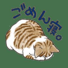Tabby CATS sticker #364501