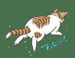 Tabby CATS sticker #364502