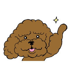 Let's talk with toy poodle!