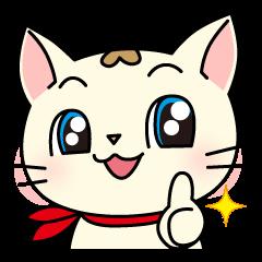 Cherry of the cat
