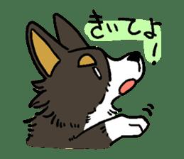 3 Corgi sticker #396442
