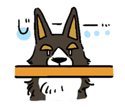 3 Corgi sticker #396452