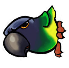 The parrot's name is Gabi & his friends sticker #412267