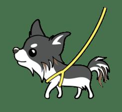 Long coat Chihuahua sticker #421610