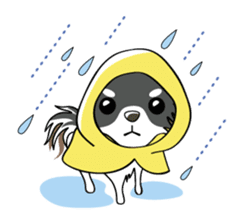 Long coat Chihuahua sticker #421611