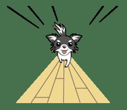Long coat Chihuahua sticker #421617