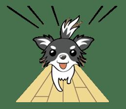Long coat Chihuahua sticker #421618