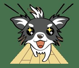 Long coat Chihuahua sticker #421619