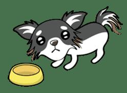 Long coat Chihuahua sticker #421629