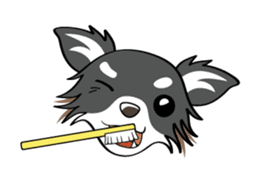 Long coat Chihuahua sticker #421633