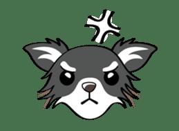 Long coat Chihuahua sticker #421635